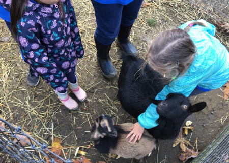 Apple Barn Petting Zoo Field Trip
